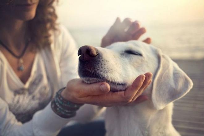 Làm bạn với chó mang lai nhiều lợi ích sức khỏe thể chất và tâm thần. Ảnh: Consumer Affairs