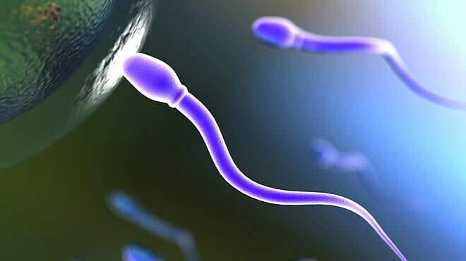 Tinh trùng gặp trứng để thụ thai. Ảnh: Costaposten