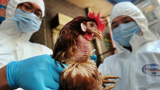Cúm gia cầm H5N6chưa ghi nhận trường hợp nào lây từ người sang người. Ảnh: SBS