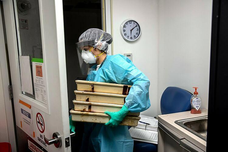 Lisa Miorin, giáo sư trợ lý vi sinh trường Y khoa Icahn ở Mount Sinai, New Yorkmang các khay tiệt trùng vào phòng thí nghiệm. Ảnh: NY Times