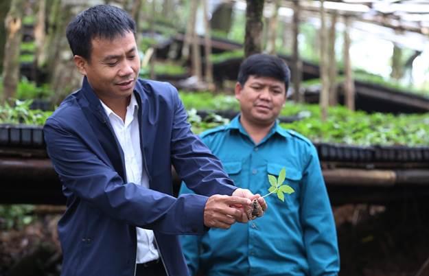 Sâm Ngọc Linh Kon Tum K5 được dày công nghiên cứu nuôi trồng đảm bảo các hoạt chất.