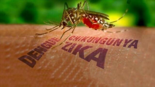 Virus Zika bị cho là nguyên nhna gây bệnh đầu nhỏ ở trẻ. Ảnh: WP.