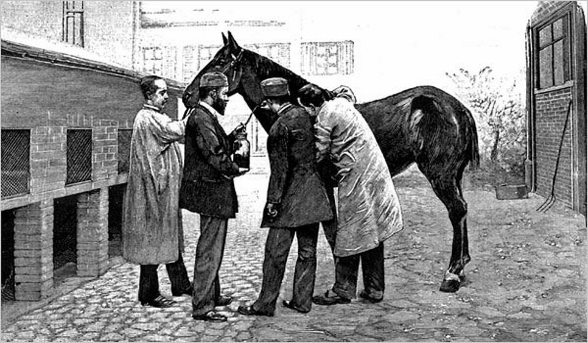 Hình vẽ trên Tạp chíScientific American, ngày 17/11/1894, minh họa cảnh bác sĩ lấy huyết tương từ ngựa là thuốc kháng độc tố. Ảnh:Archive of Dr. Howard Markel