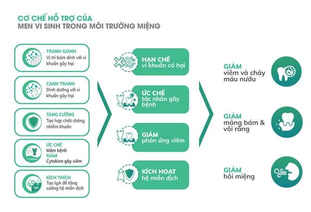 Cơ chế hỗ trợ của men vi sinh trong môi trường miệng.
