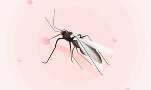 Những bệnh nguy hiểm do muỗi gây ra
