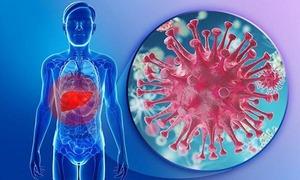 Cách virus viêm gan B chống lại hệ miễn dịch của người