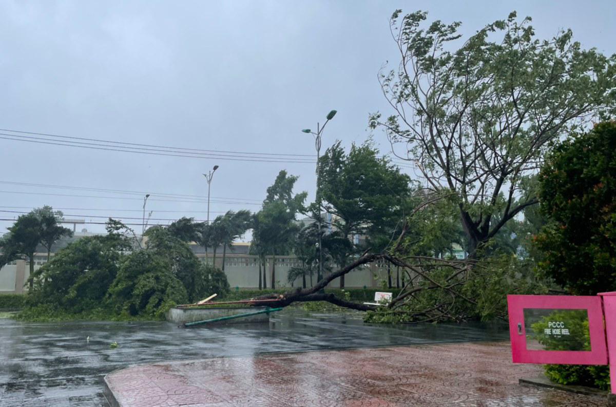 Cây xanh trong khuôn viên Bệnh viện Sản Nhi Quảng Ngãi ngã đổ trong bão, sáng 28/10. Gần 1.000 bệnh nhân trong viện được yêu cầu ở yên trong phòng, thuốc phát tại chỗ. Ảnh do bác sĩ cung cấp.