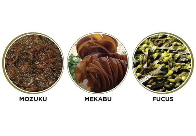 Ba loại Fucoidan phổ biến.
