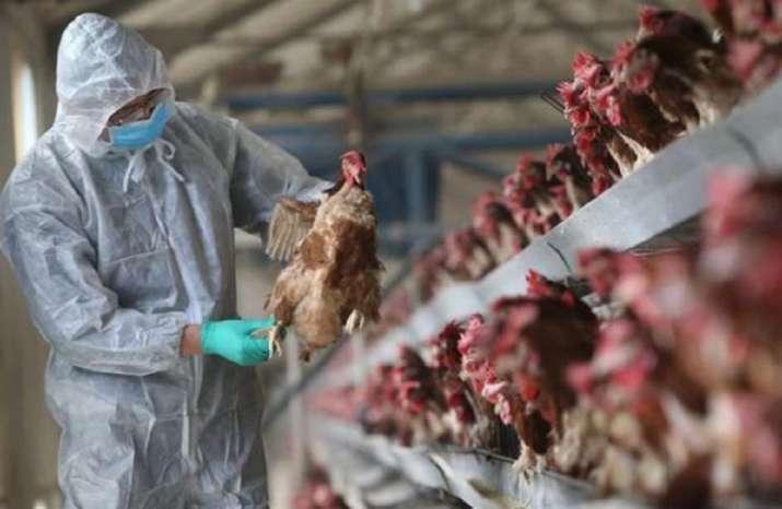 Nga ghi nhận 7 công nhân ở trang trại nuôi gà nhiễm virus cúm A H5N8. Ảnh: AP.