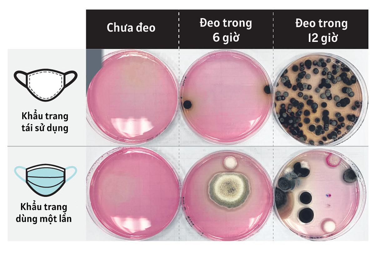 Mẫu thí nghiệm so sánh lượng vi khuẩn trong khẩu trang dùng một lần và khẩu trang có thể tái sử dụng. Ảnh: ST Graphic