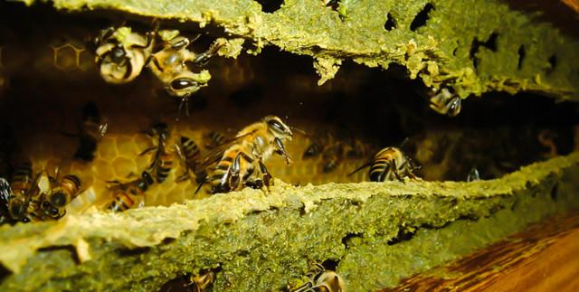 Keo ong có nhiều lợi ích với sức khỏe.
