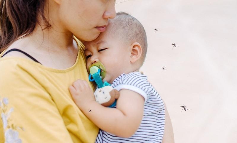 Muỗi Culex là con đường trung gian lây truyền bệnh viêm não Nhật Bản.
