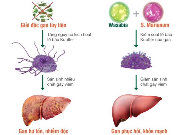 [Caption]Các tinh chất quý đã được chứng minh giúp giải độc gan hiệu quả(Nguồn hình: ECO)